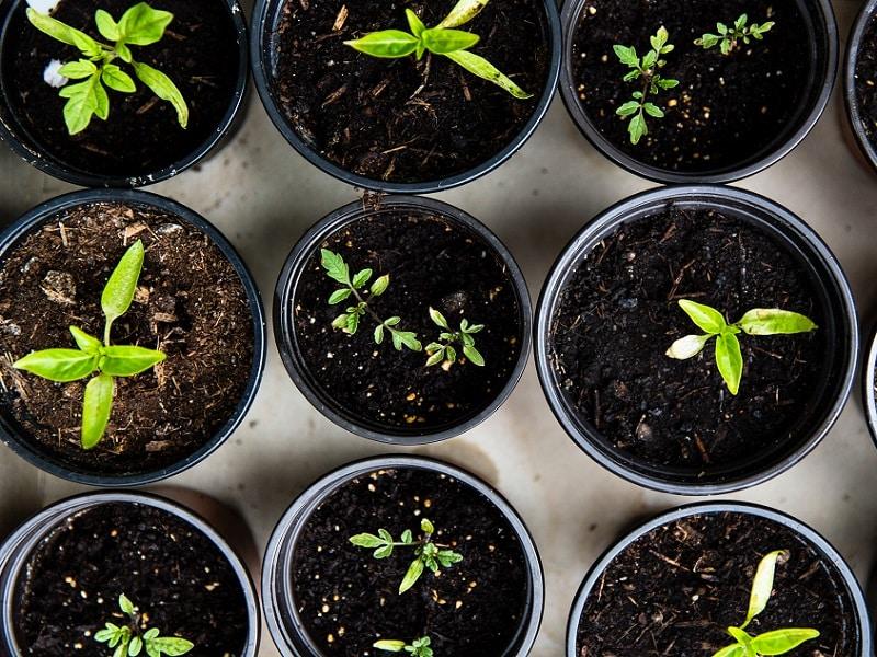 Et si vous faisiez pousser des plantes pendant votre convalescence ? Les bienfaits du jardinage quand on est malade, et des astuces pour jardiner facilement en appartement sans effort physique